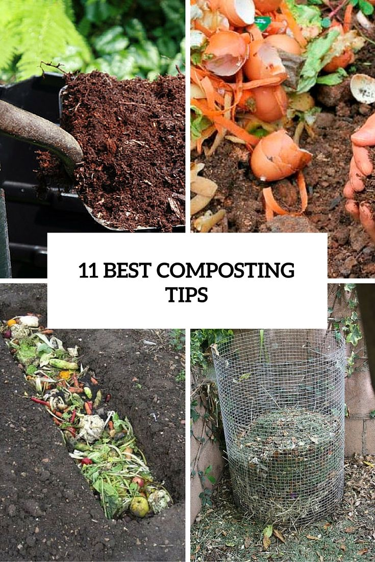 11 Best Composting Tips To Create A