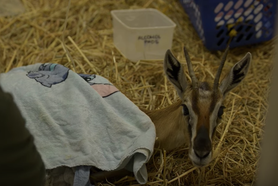 Conheça a história do Hospital da Vida Selvagem de Israel, ele cuida de milhares de animais feridos a cada ano.