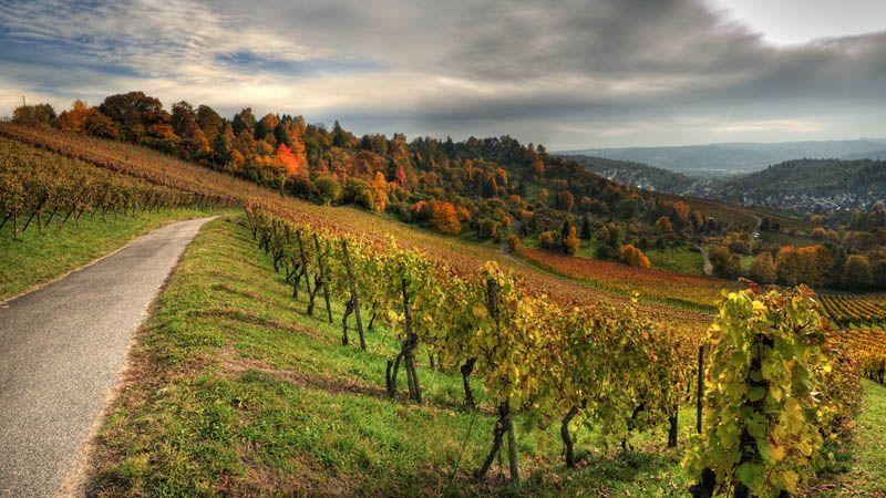 Stuttgart Vineyards – Germany