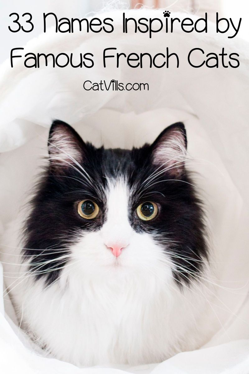 309 Fantastique French Cat Names French Cats Cat Names Cats