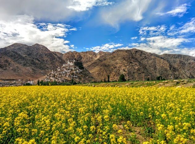 Stunningly beautiful Chemrey Monastery surrounded by mustard fields and the high Himalayas, Ladakh