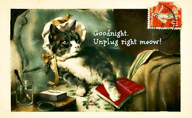 Time to unplug, read a book or take a nap @catwisdom101