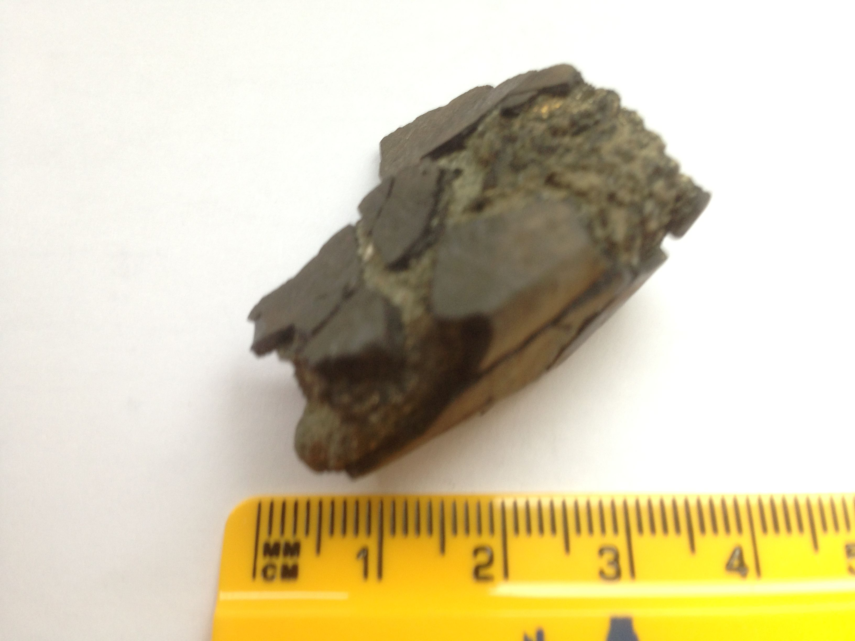 Fossil bone fragment from Bracklesham. Not too sure what it is. 19 April 2014