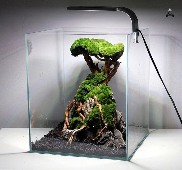 Aquascape Ancient Tree - Aquaman Nature Studio in 2020 ...
