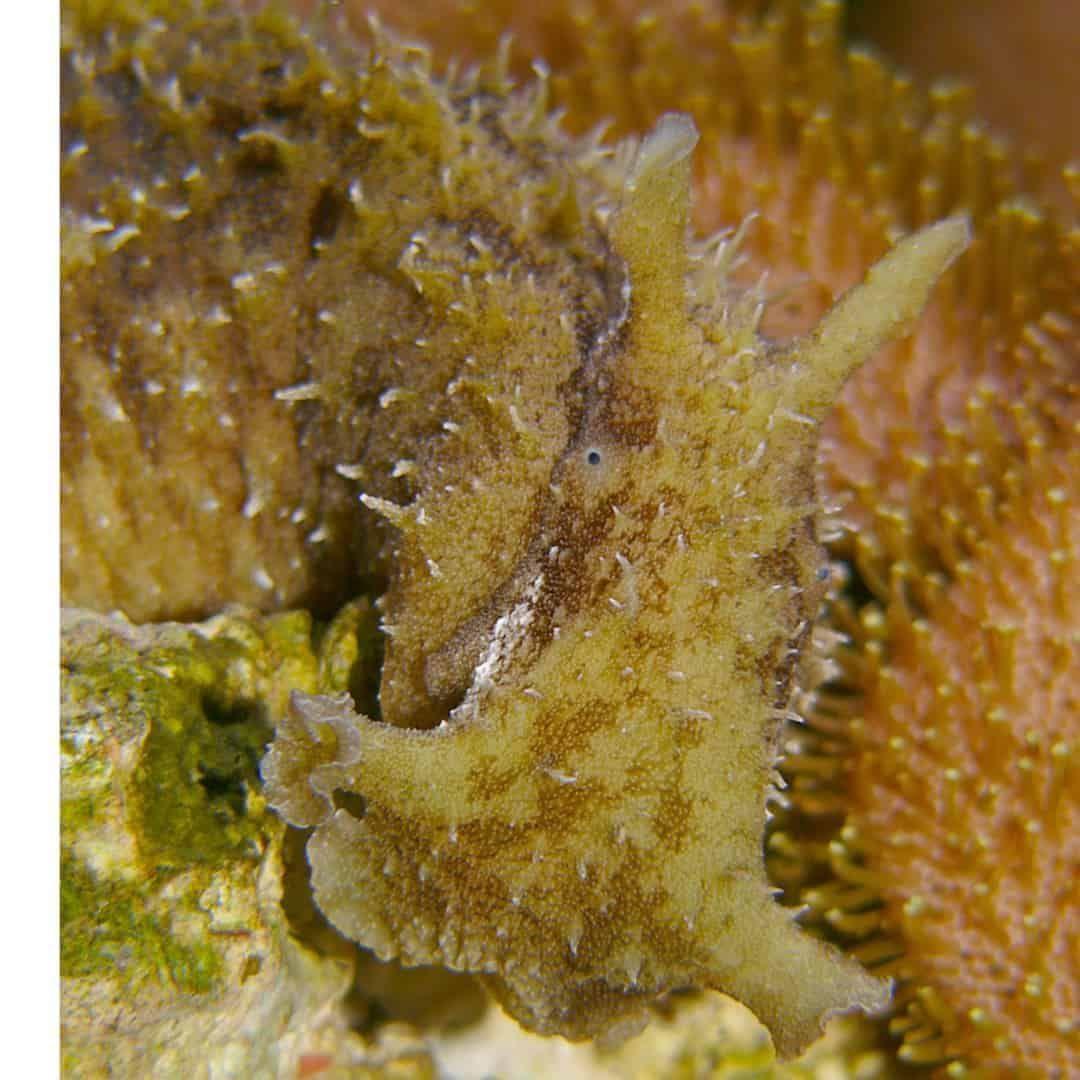 Pin On Sea Slug Nudibranchs