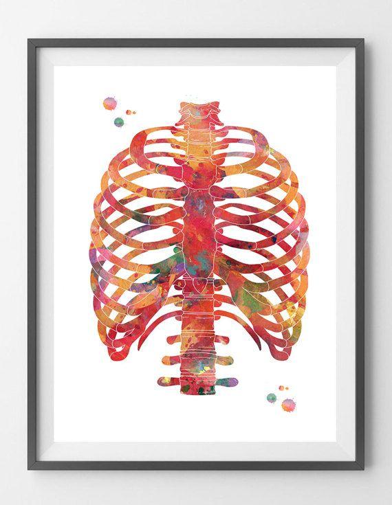 Rib cage watercolor print anatomy art thorax poster medical art ...