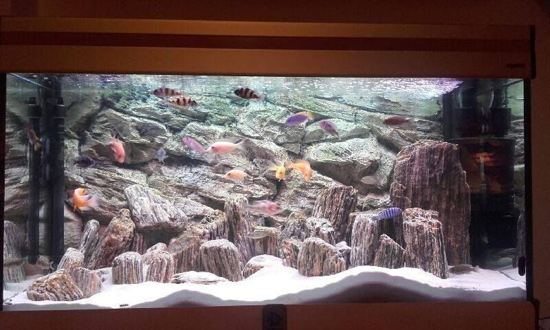 Natural Looking Setup With 3d Beige Rock Background And Natural Wood Rock Stones Fish Tank Decorations Aquarium Decorations Aquarium Backgrounds