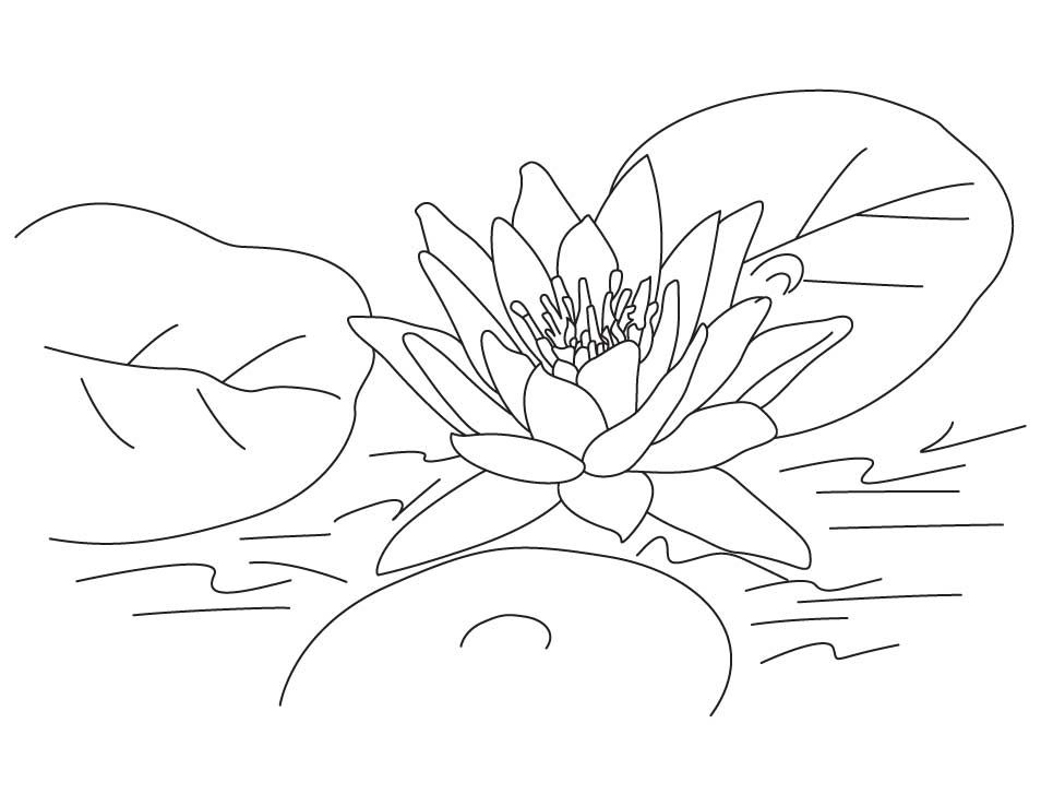 Lotus Coloring Pages To Print