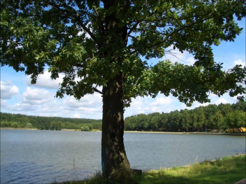 фото тополя на берегу реки типовых деревянных