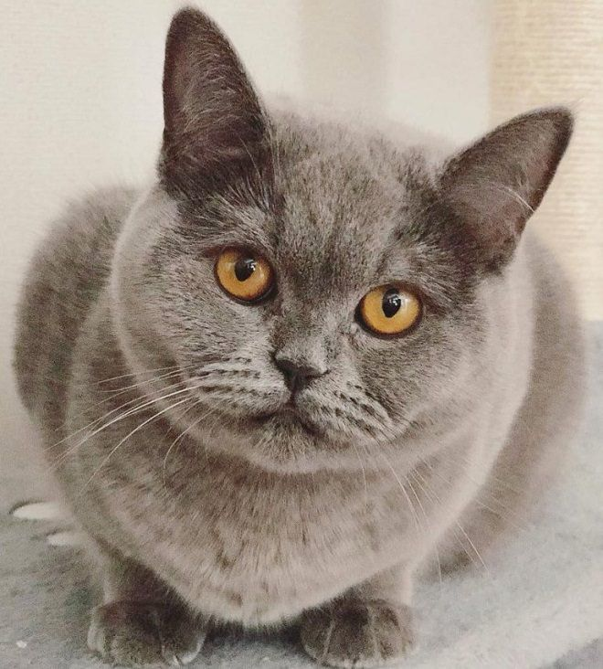 32 Female Cat Names For Grey Cats Animales