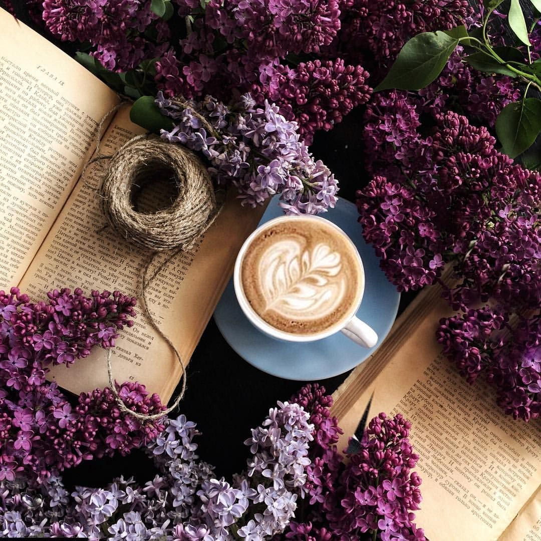 Утро цветы книги картинки