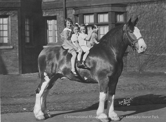 Horse and kids.