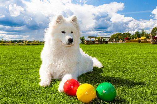 Descubre Los Mejores Juegos De Inteligencia Para Perros Wakyma Perros Animales Animales Inteligentes