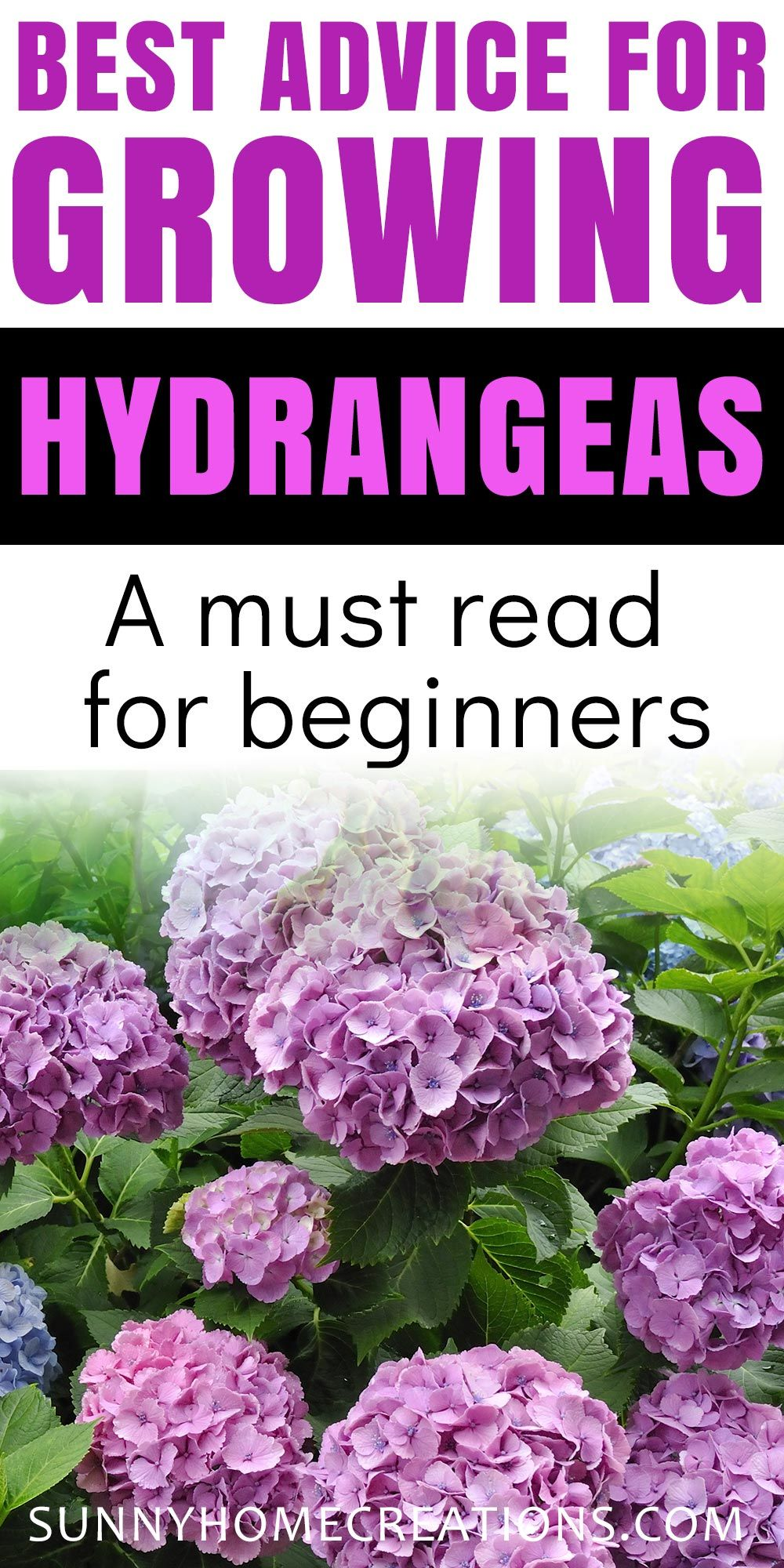 Hydrangea Care And Growing Tips In 2020 Growing Hydrangeas Hydrangea Landscaping Planting Hydrangeas