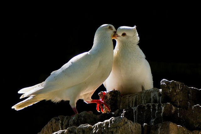 Love Pet Birds Beautiful Birds Wildlife Animals
