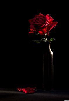 Single-rose-in black