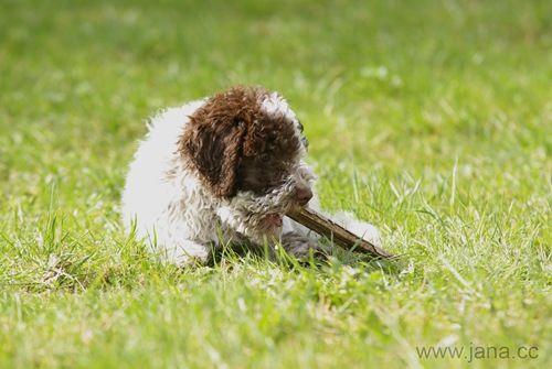 Die Neue Suche Hund Hunde Und Neue Wege
