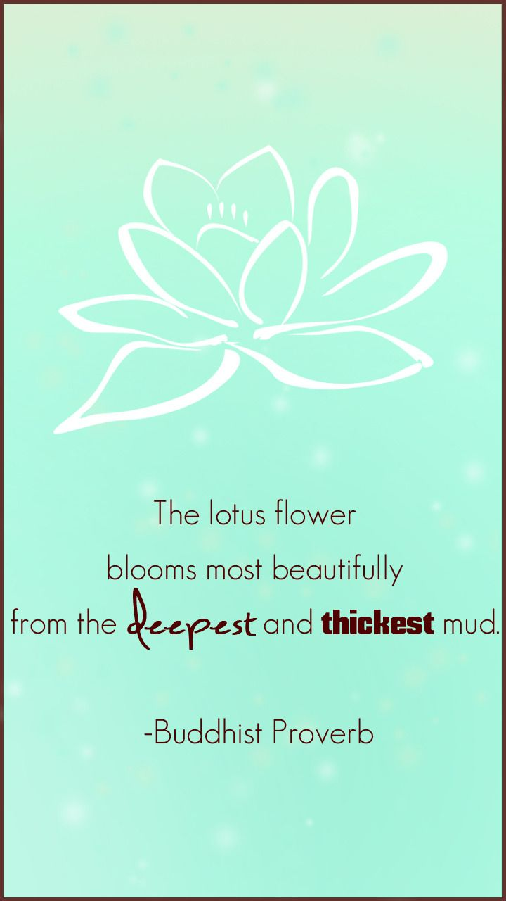 Ch3rryiie Photo Thoughts Quotes Proverbs Lotus