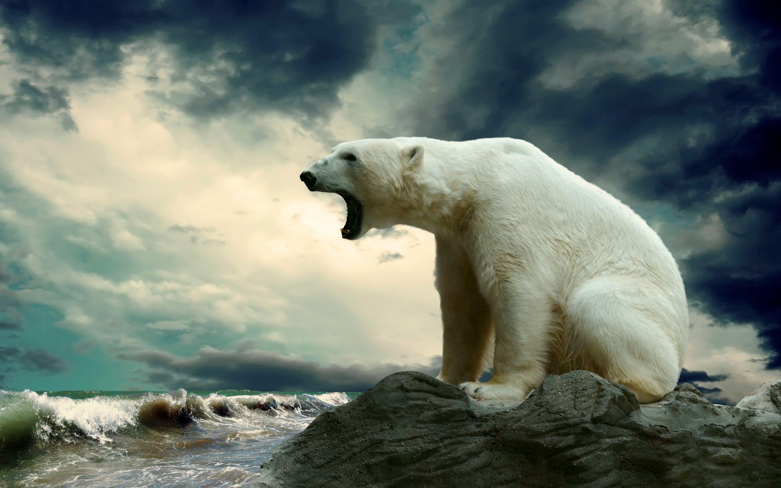 High Resolution Polar Bear Wallpaper HD Picture Widescreen