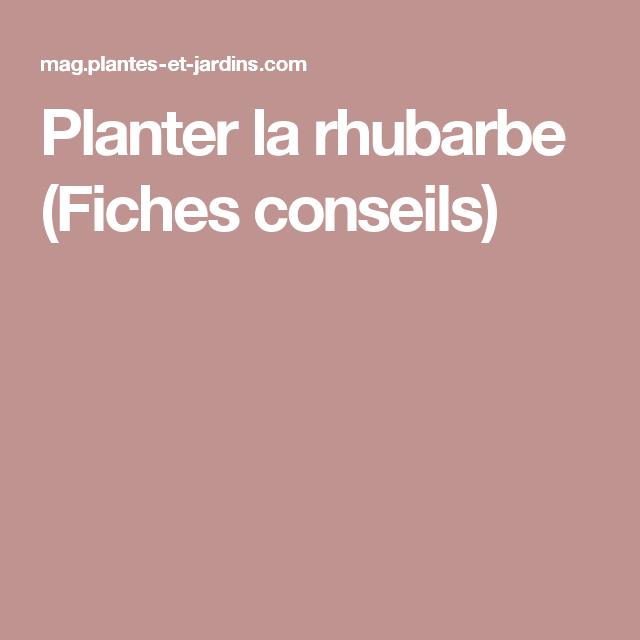 Planter La Rhubarbe Avec Images Planter Olivier Conseils De