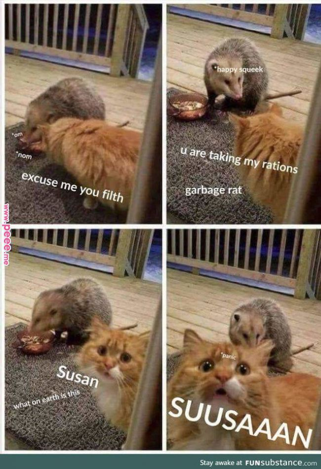 Dammit Susan Funny cat pictures, Cute funny animals