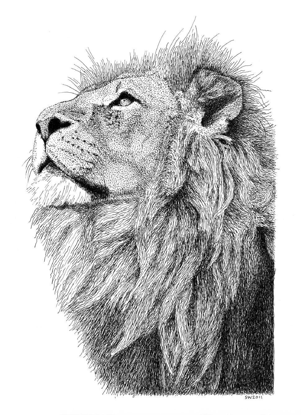 Pen & Ink Drawing: Drawing/Landscape, Animal Lion   ART ...