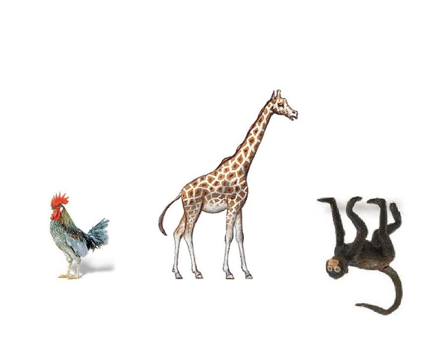 Hand writing helpers. chickens- lower case letters, giraffes- tall letters, and monkeys- letters that hang low