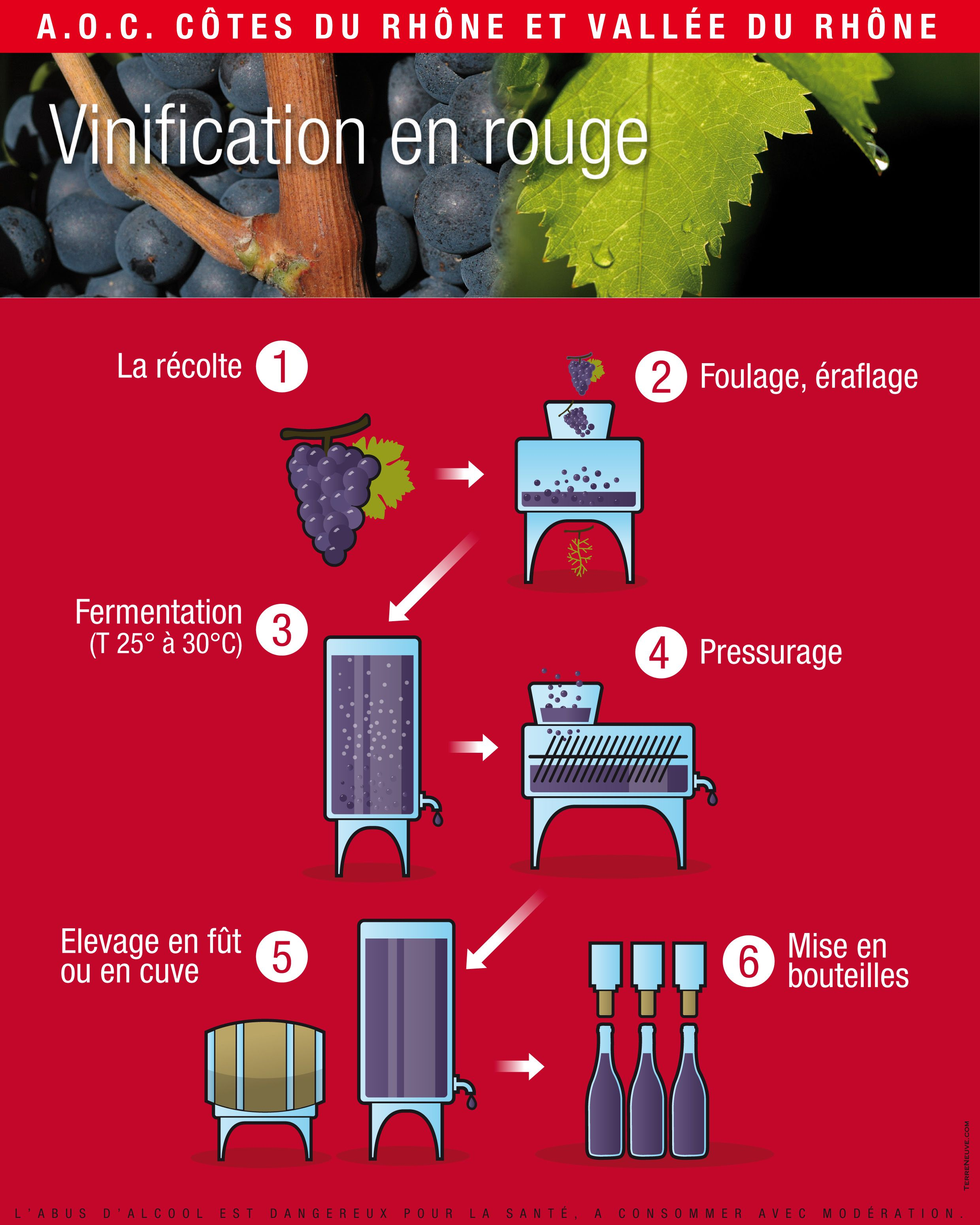 Vinification red wine
