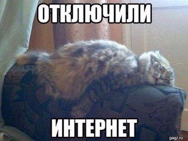 Podborka Smeshnyh Memov S Nadpisyami 61 Foto Smeshno Smeshnye