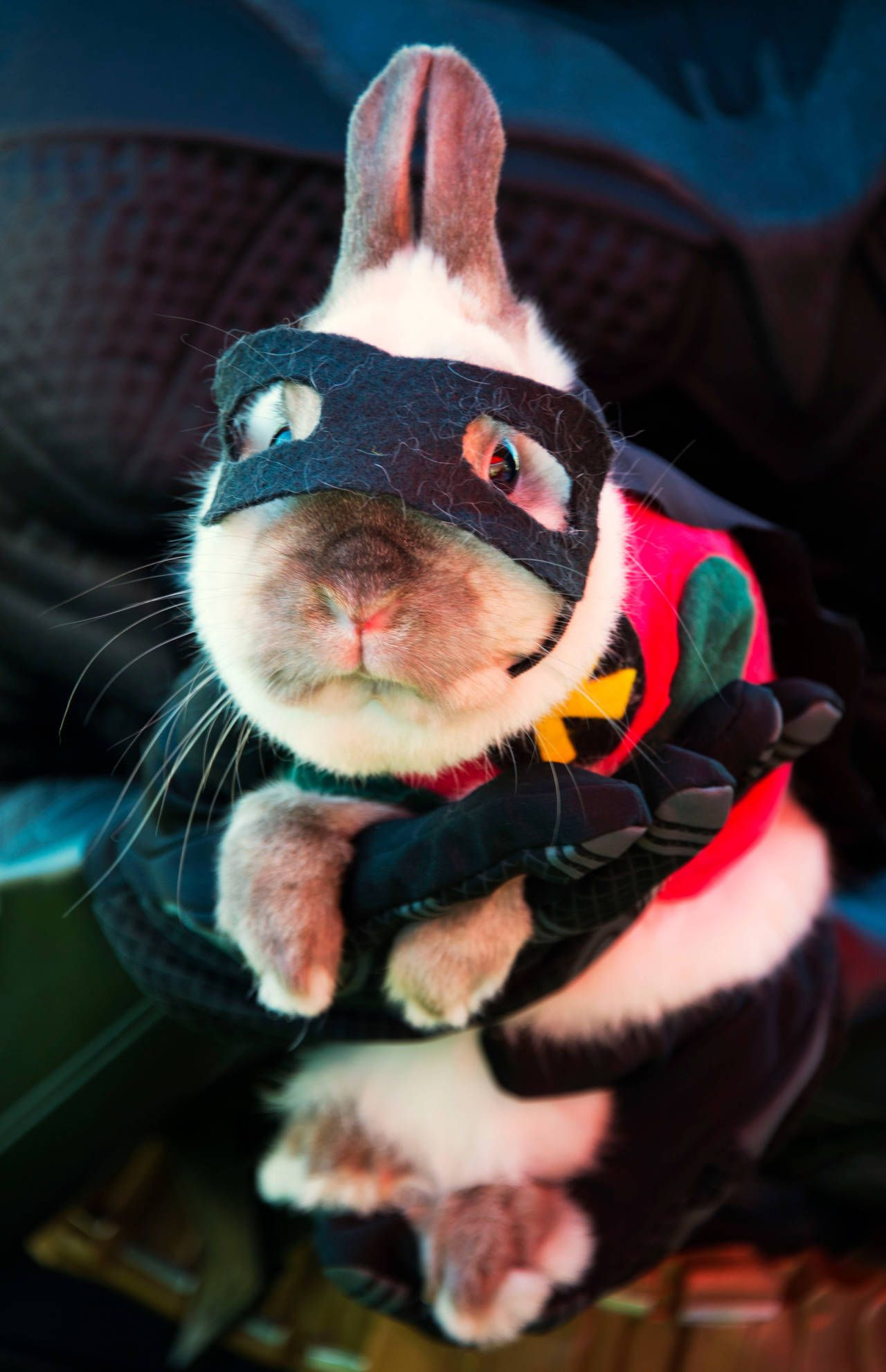 29 Pet Halloween Costumes So Cute You'll Cry Pet