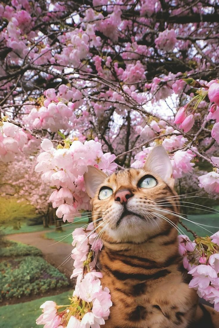 Pin by Giggler Nco on Cat in Flower Field Bengal cat