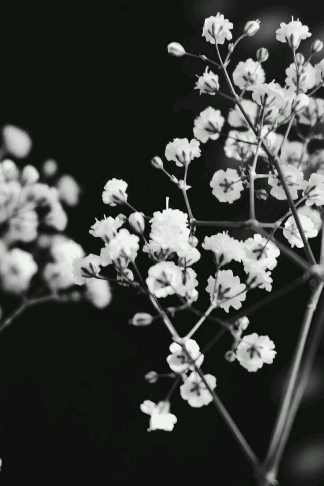 Rocío (With images) Black and white aesthetic, Black and