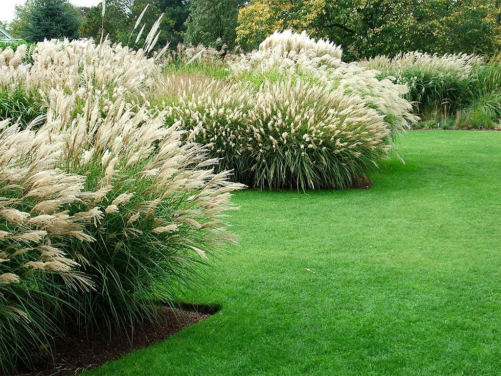 Inspiring landscaping grasses ideas design ideas for Landscaping ideas using ornamental grasses