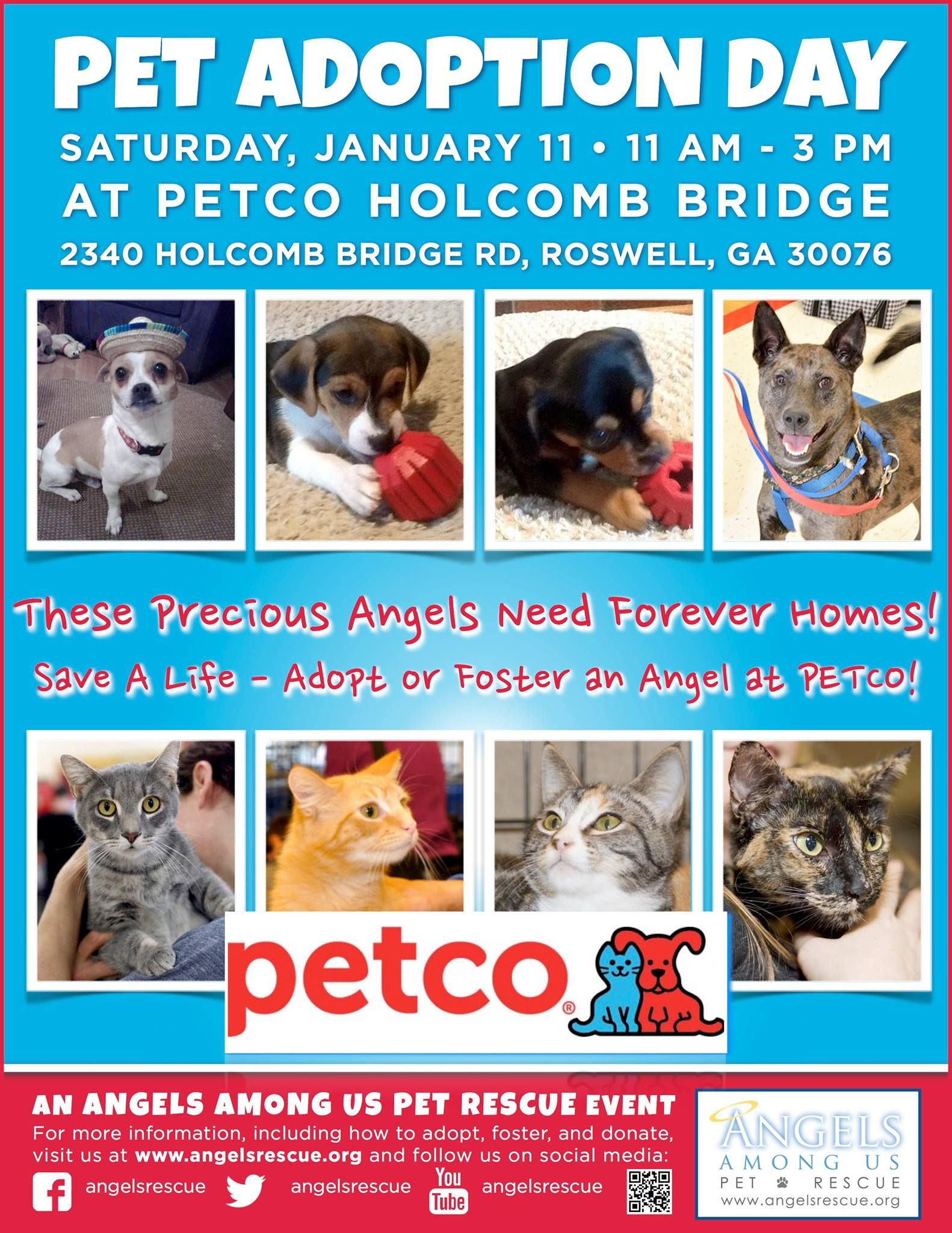Please Join Angels Among Us Pet Rescue At Petco Holcomb Bridge This Saturday 11am 3pm Adopt Don T Shop This Weekend Please S Animal Rescue Cat Adoption Pets