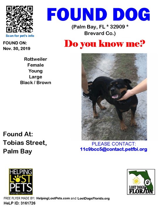 Pin by Lost Dogs Florida on Found Dogs Losing a dog
