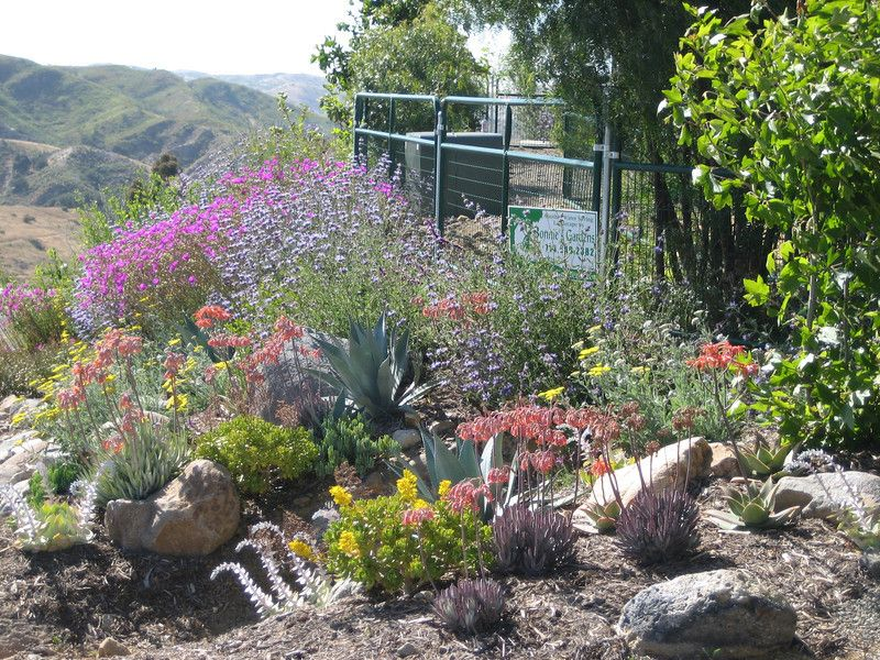 drought tolerant landscaping ideas   Succulents, Grasses and ...