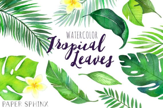 Watercolor Tropical Leaves Clipart Palm Leaves Clipart Etsy Leaf Clipart Clip Art Tropical Leaves Find over 100+ of the best free tropical leaves images. watercolor tropical leaves clipart palm