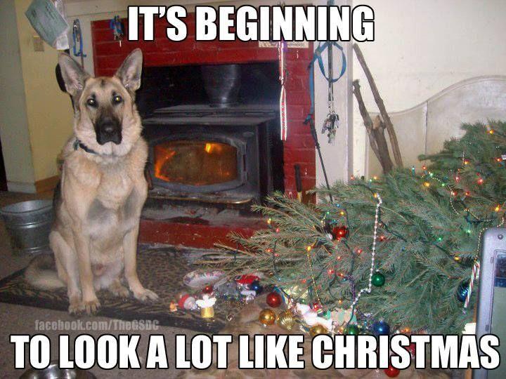 Christmas Animal Memes | Christmas | Pinterest | German shepherds ...
