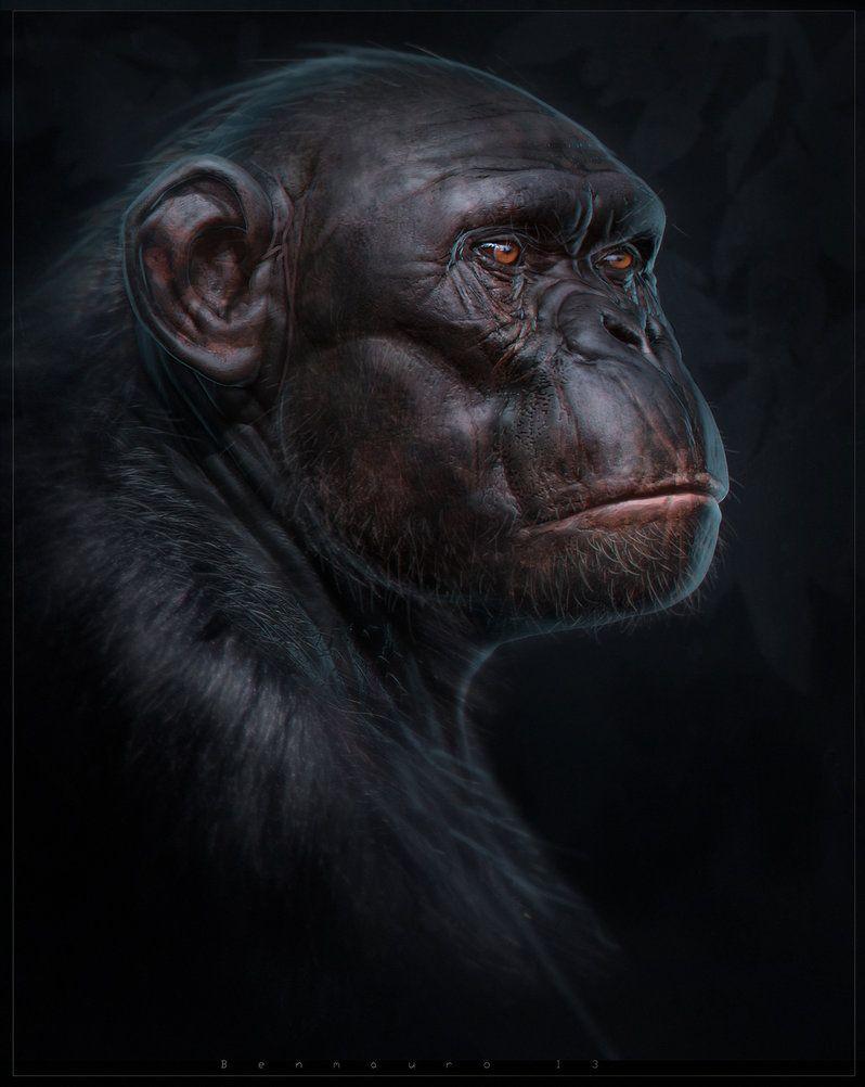 Primate Anatomy tutorial by BenMauro