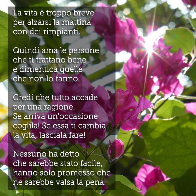 Immagine di http://aforismi.meglio.it/img/frasi/la-vita-e ...