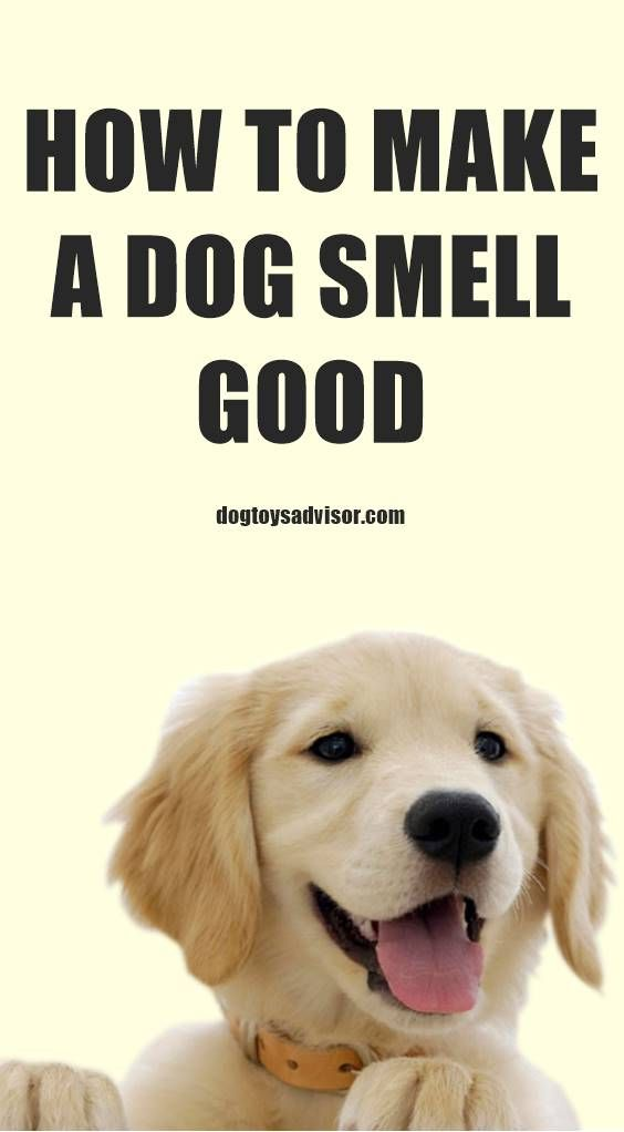 How To Make A Dog Smell Good Between Baths In 2020  Dog -7295