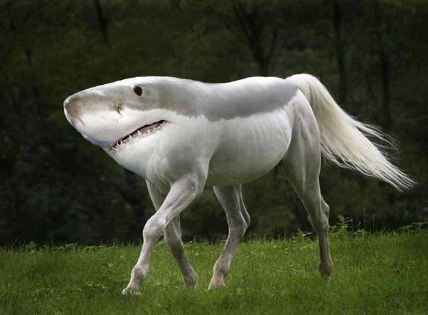 retarded running shark
