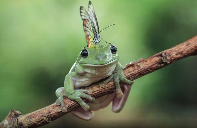 fotógrafo apaixonado por sapos faz as imagens mais adoráveis e
