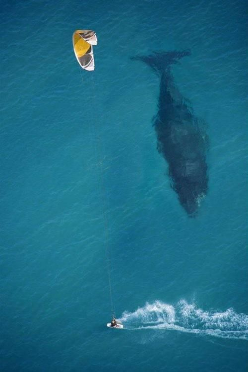 Photography - Point of view - Baby Whale