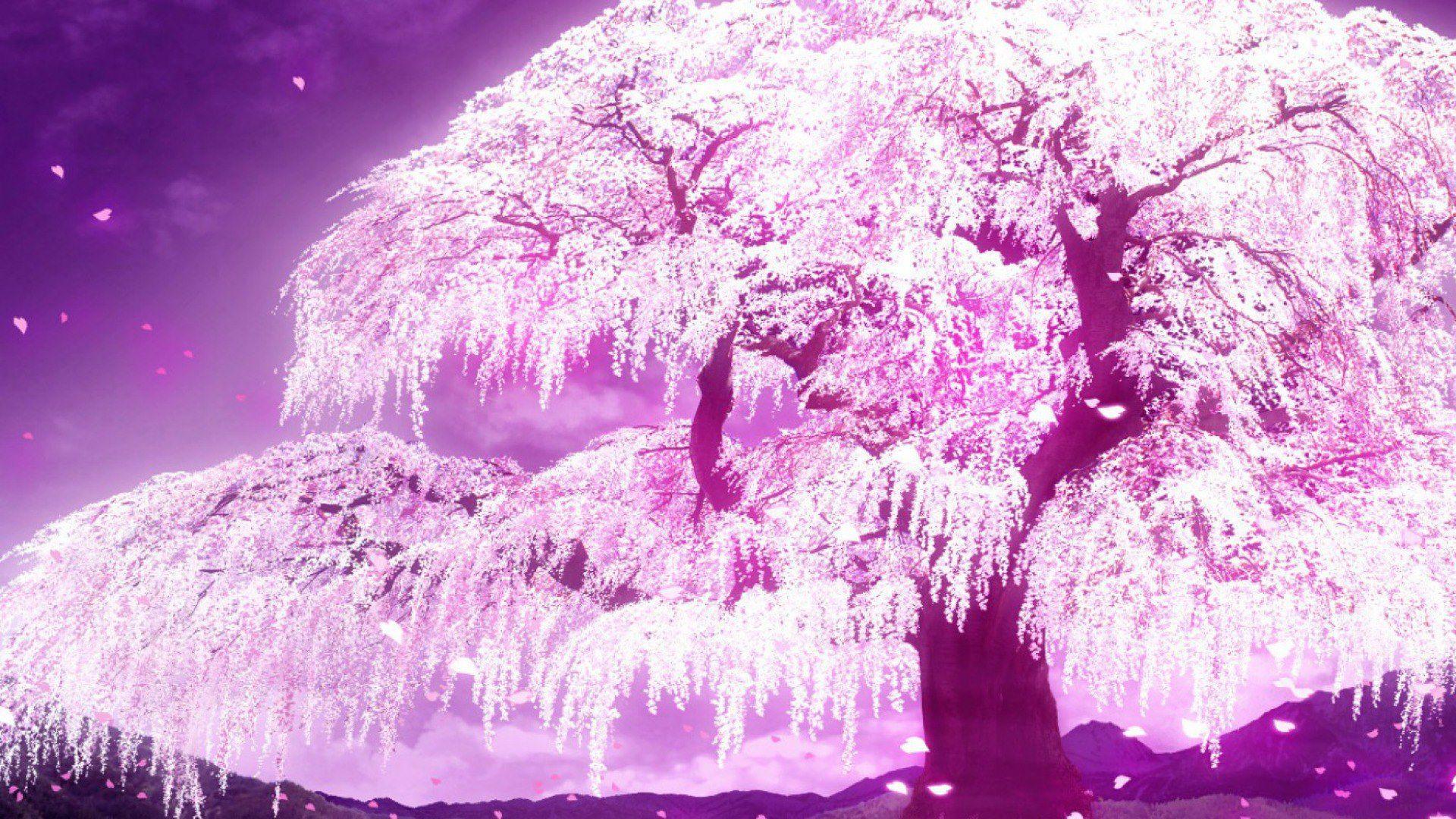 Download Wallpaper Night Cherry Blossom - 627fe1357c8a986edb06f5ed34b93f54  Trends.jpg