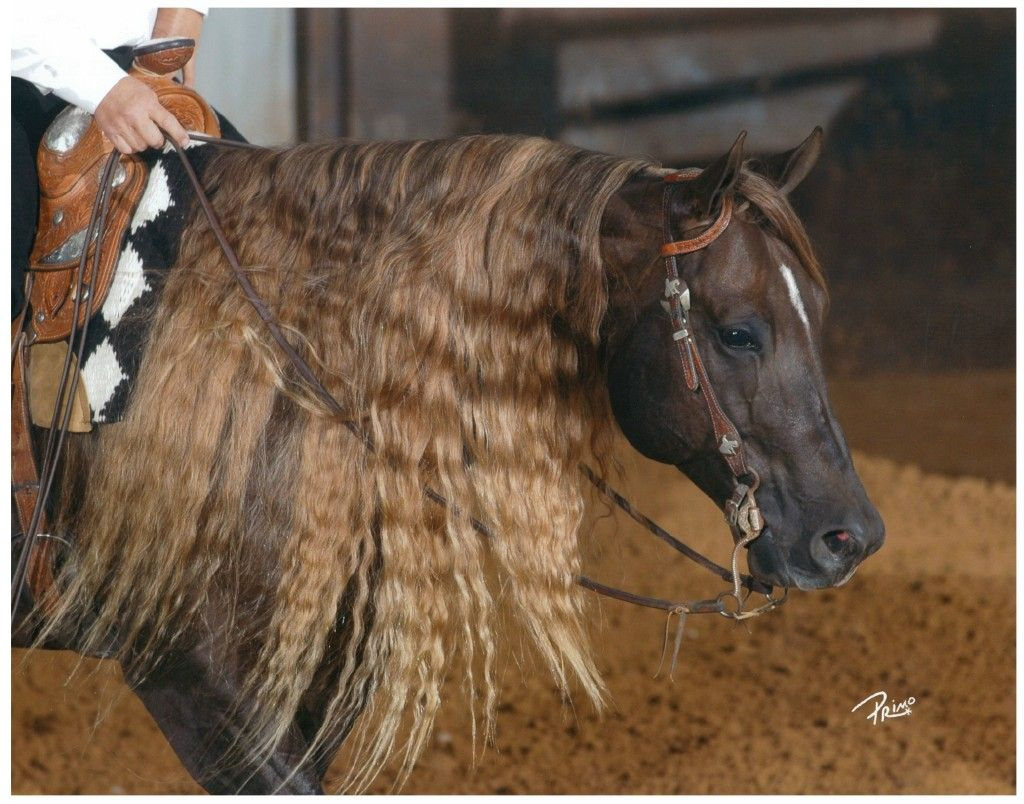 Engage Farms - Stallions - Footworks Hoss