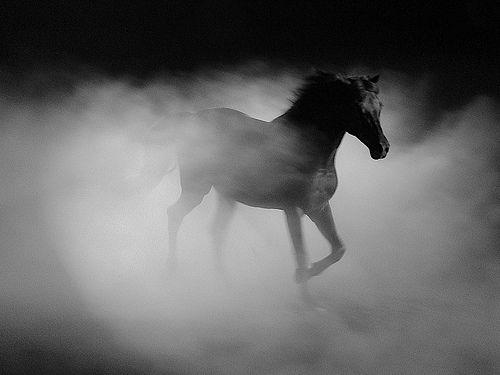 Black Horse | FreedomGallery