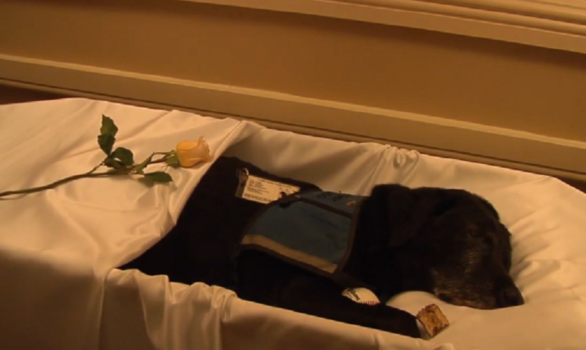 They Made A Funeral For Tara The Dog In Honor Of Her Service It S Heartwarming Grief Therapy Pet Cremation Therapy Dogs