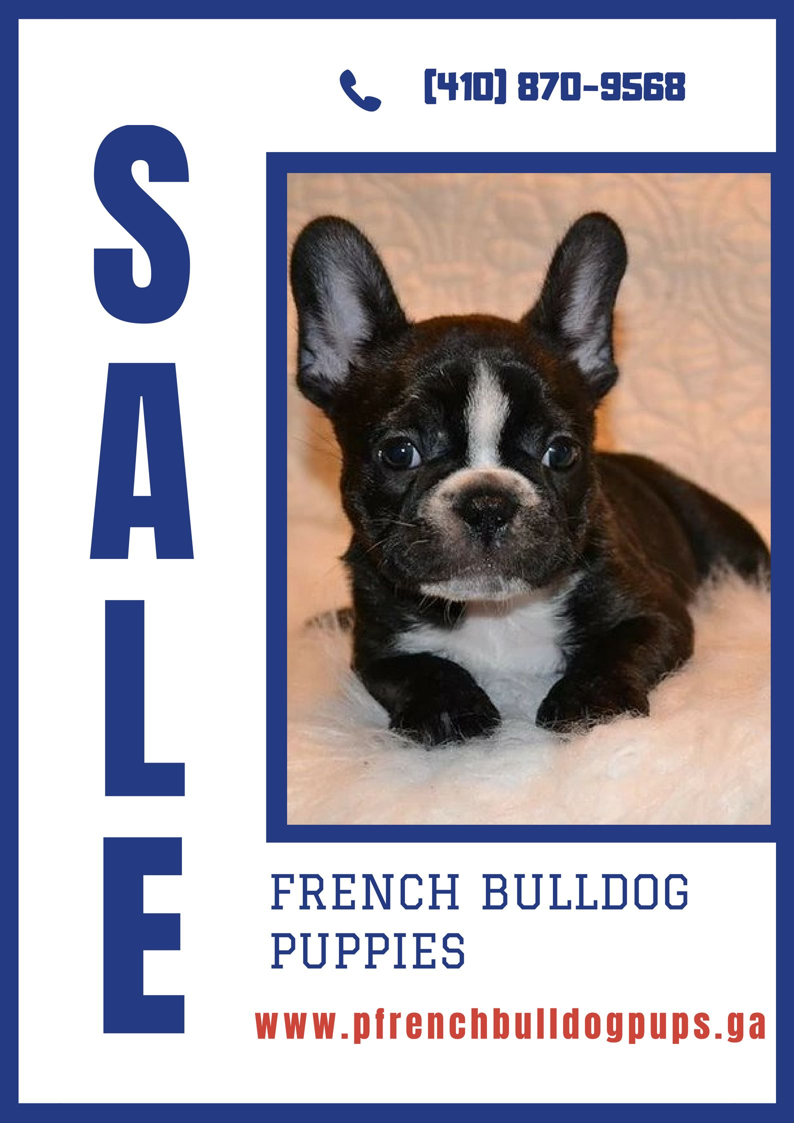 Frenchbulldogpuppies with akc standard rare color