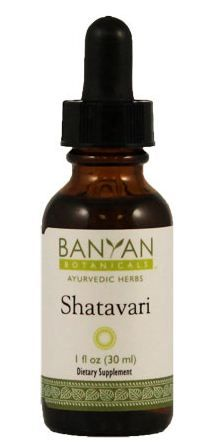 Asparagus Racemosa Shatavari Is An Ayurvedic Herb Which Is Translates As She Who Posses 100 Husbands It S A Toni Liquid Extract Ayurvedic Herbs Herbal Cure